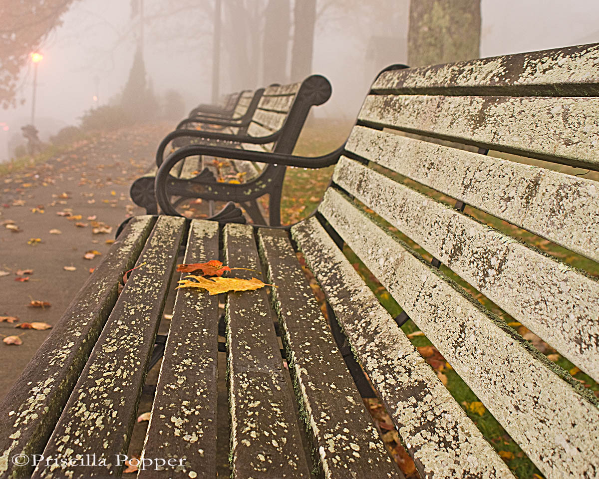 Priscilla Popper - 3rd Place - Park Benches in Blowing Rock